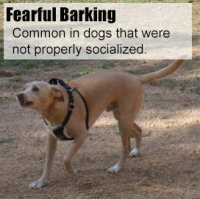 How To Stop Dog Barking The Ultimate Guide