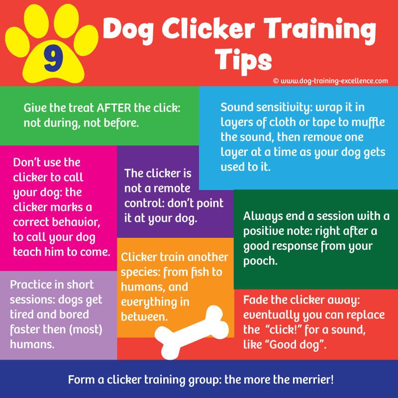 dog clicker training tips