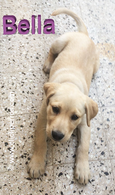 female dog names, dog names for labrador retrievers