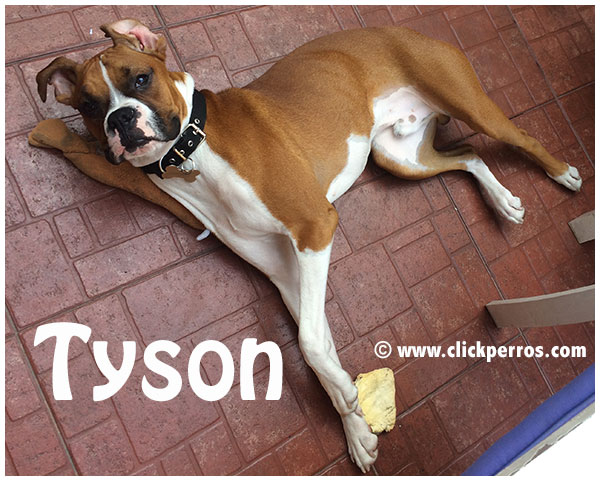 good dog names, boxer dog names