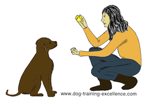 dog training hand signal take it by DTE