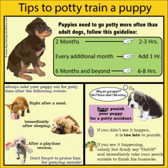 Best Golden Retriever Training Guide