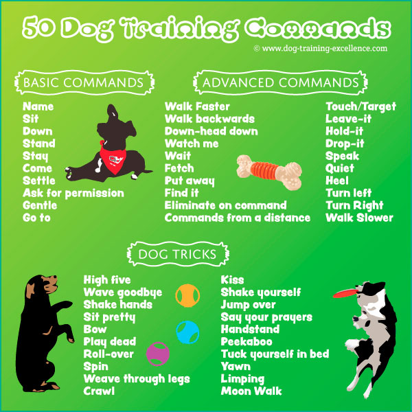 Dog Training Commands Guide Basic To Advanced
