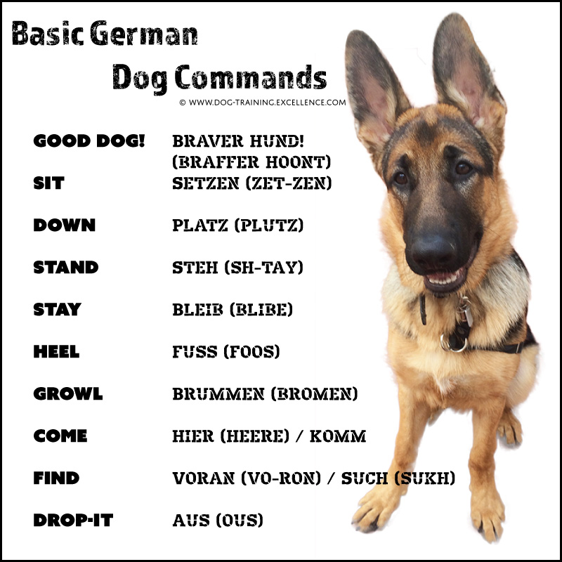 21 german dog commands to train your dog With dog training commands