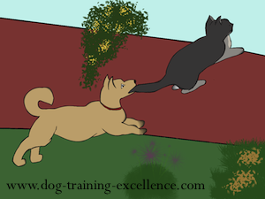 cartoon cat and dog by Dog Training Excellence