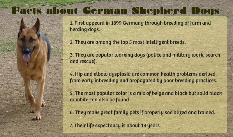 German Shepherd Facts
