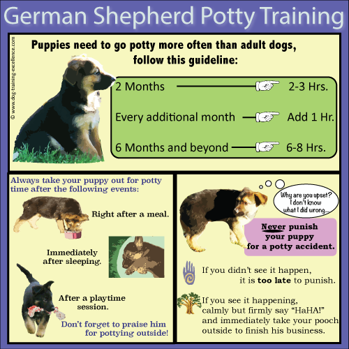 German Shepherd puppy potty training, house training