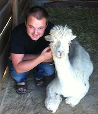 Pet sitting an Alpaca