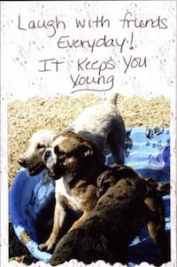 The Pet Postcard Project