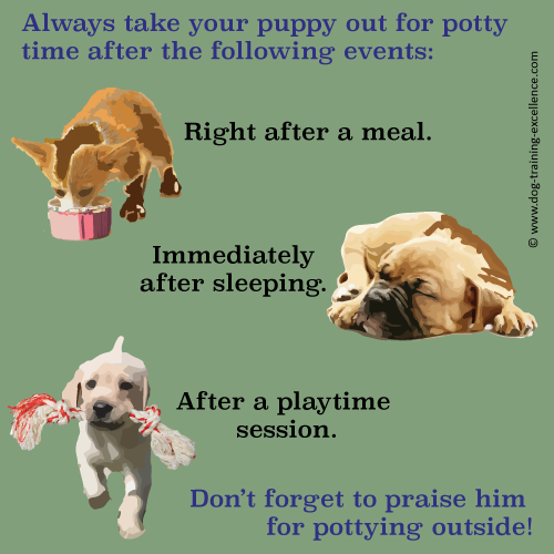 how to potty train a puppy Well this is a simple process as long as you put in your time to chalk out a routine that matches your pup's daily routine having a pup at home is like having a baby in the house except that they grow up quickly :p generally these young naughty.