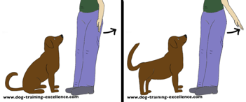 dog training hand signal for stand by DTE