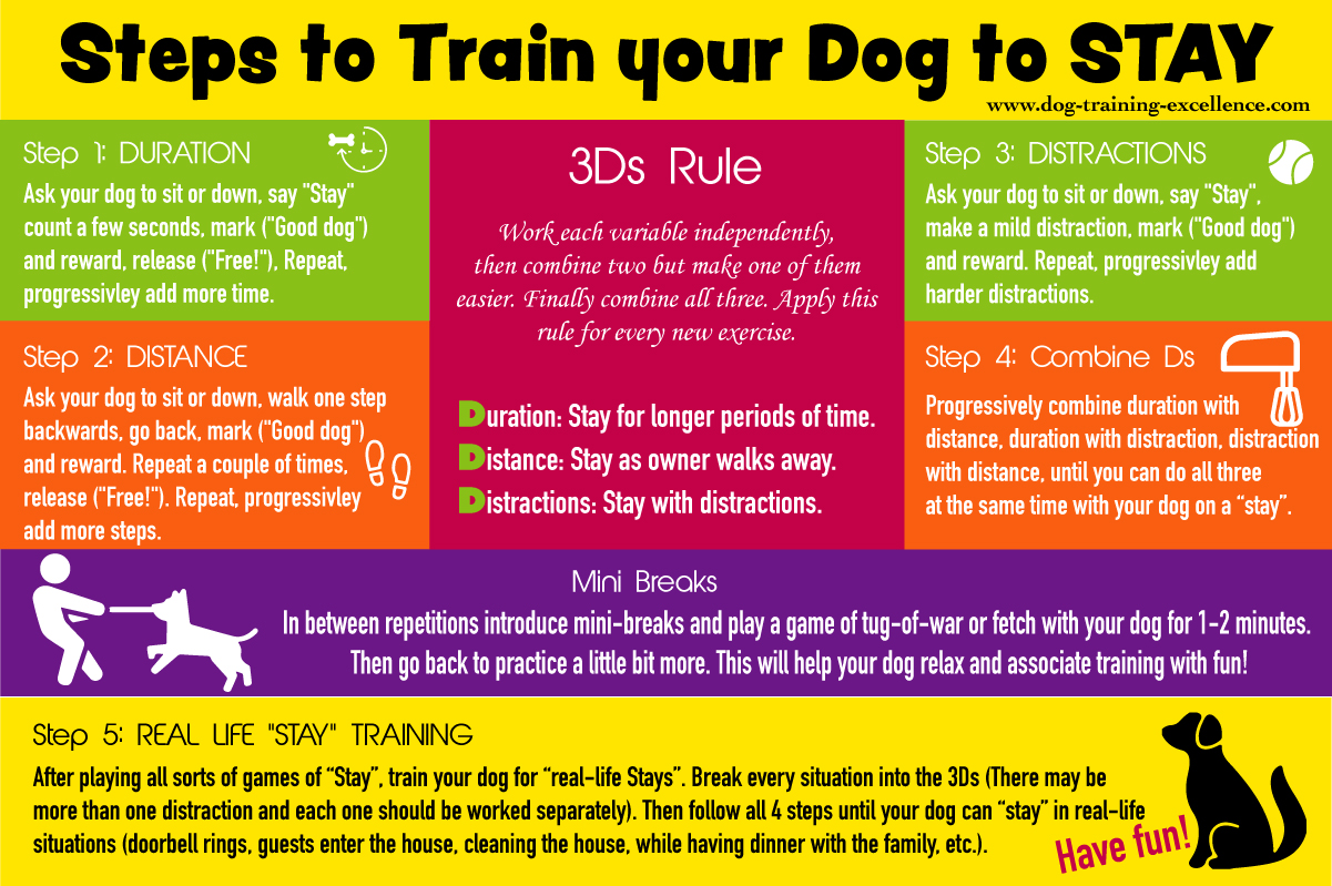 Training your dog to stay, dog stay infographic, sit stay, down stay, dog training stay