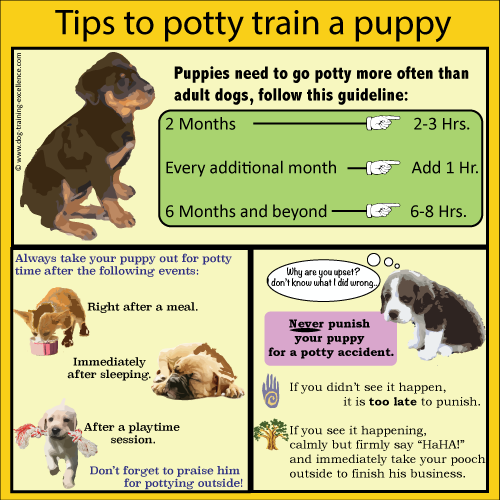 Potty Train Your Dog Fast