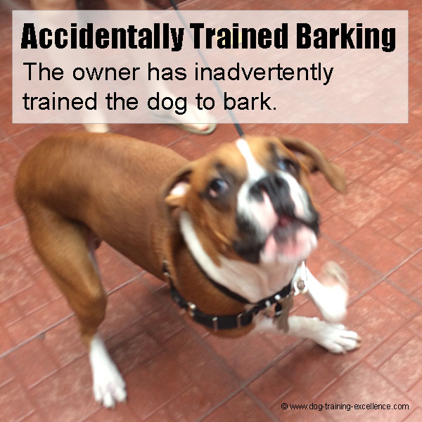 How to Stop Dog Barking: The Ultimate Guide