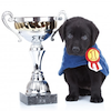 black lab puppy with trophy by Viorel Sima