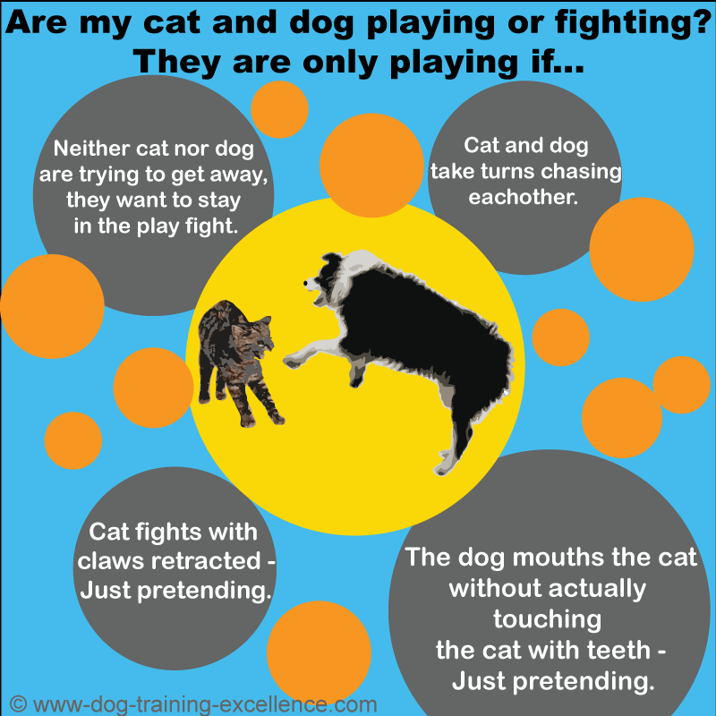 Are my cat and dog playing or fighting, difference between dog and cat play or fight