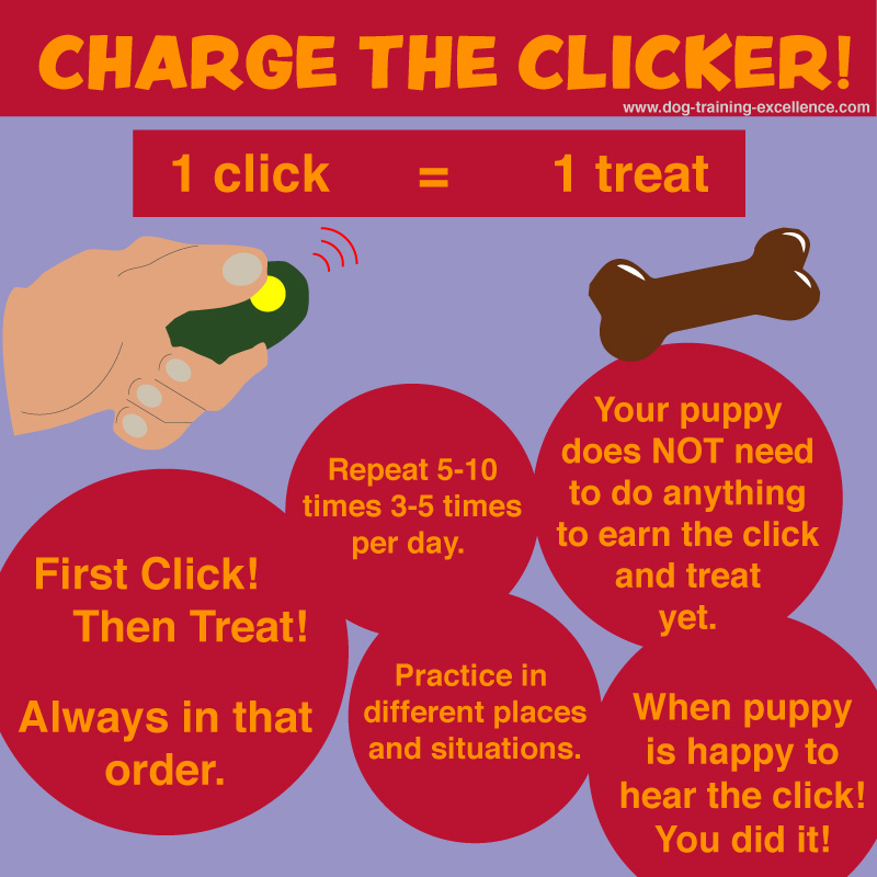puppy clicker training, charge the clicker, intro to clicker training, beginning clicker training, getting started with clicker training