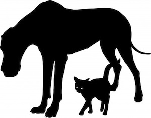 Dogs and Cats getting along by Vladimir Ceresnak