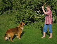 Boy and dog playing fetch by Martina Osmy