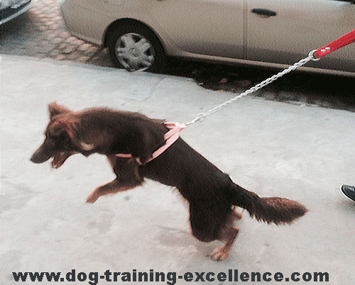 how to train a cat to walk without a leash