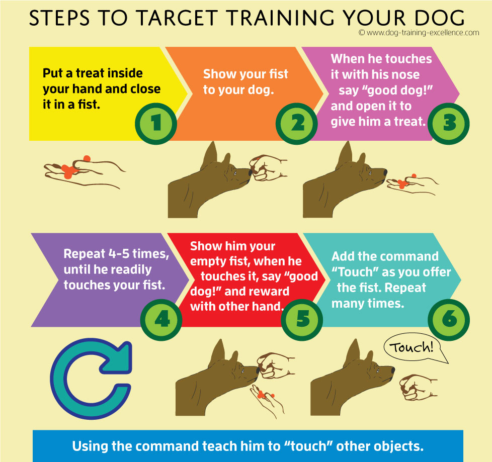 dog target training, target training dog, target train your dog