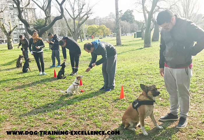 dog training class, dog training, should I get a puppy