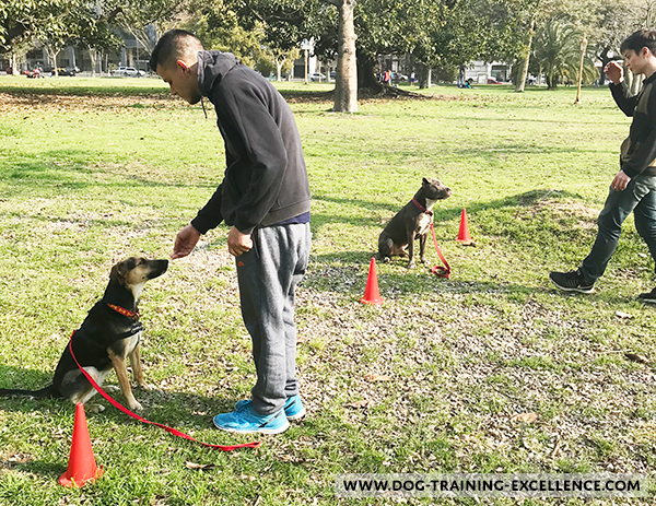 dog training sit stay at the park, dog training class, should I get a dog