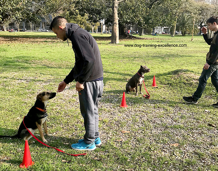 training your dog to stay, sit stay, dog training
