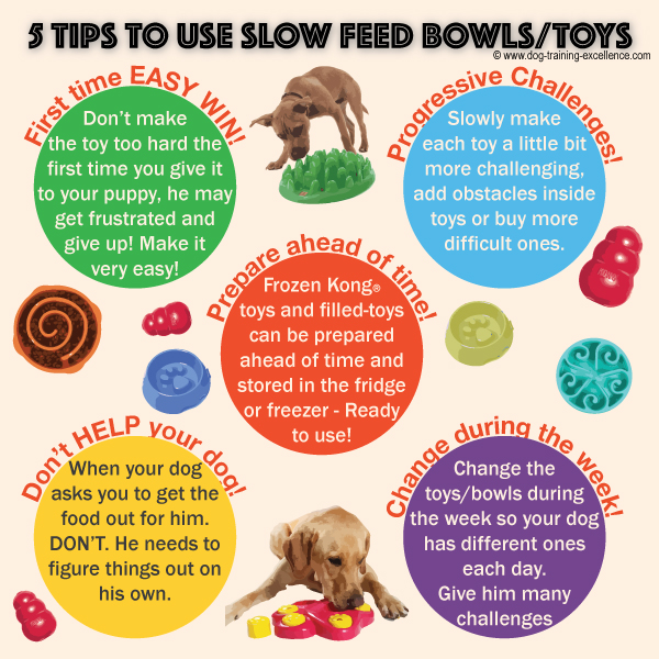 slow feed dog bowls, interactive toys, dog training tips