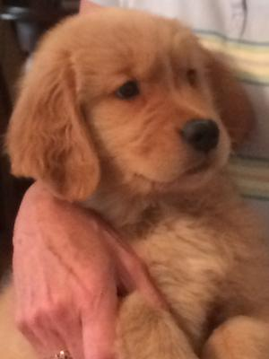 Ziggy at 9 weeks