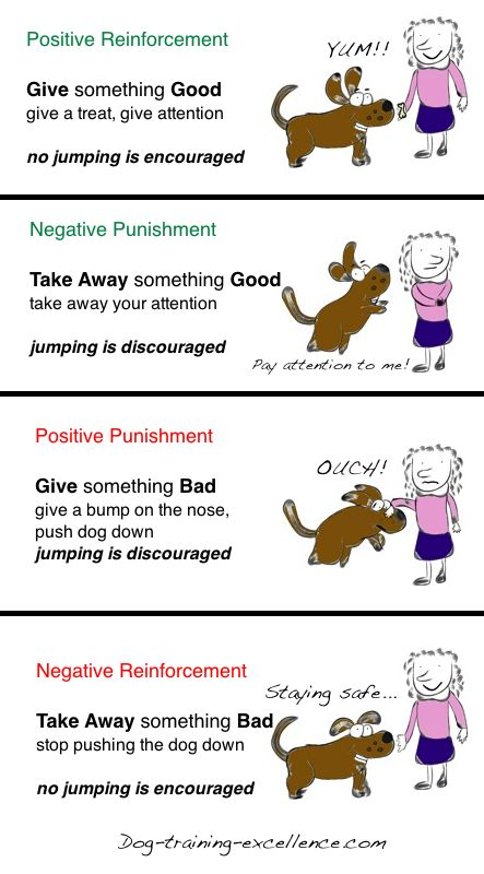 Operant Conditioning Using Positive Vs Negative Dog Training