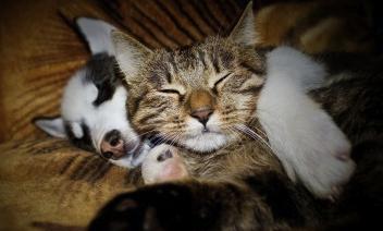 puppy and cat sleeping together by Veronika Komarova