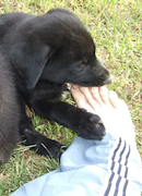 puppy mouthing foot by Trespassers Willia