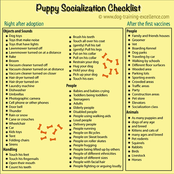 Should I get a puppy, puppy socialization checklist