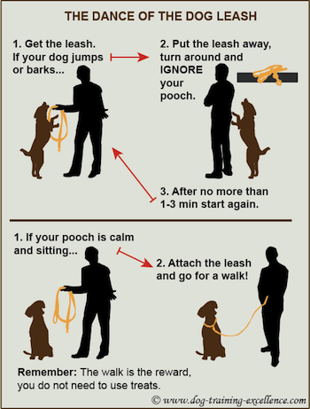 the dance of the dog leash train your dog not to jump to put the leash on
