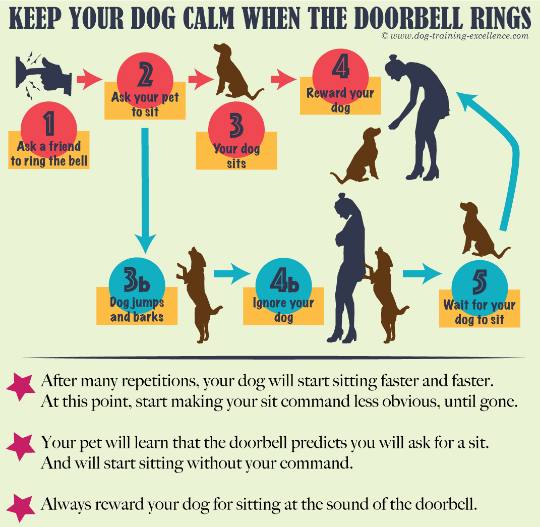 How to stop a dog barking at the doorbell How to keep a dog calm at the doorbell