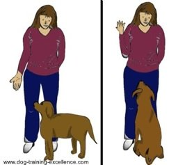 dog training hand signal for sit by DTE