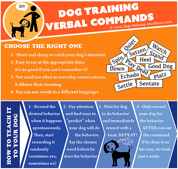 dog training verbal commands