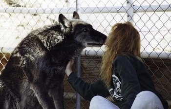 Nicole wilde and her wolf kissing