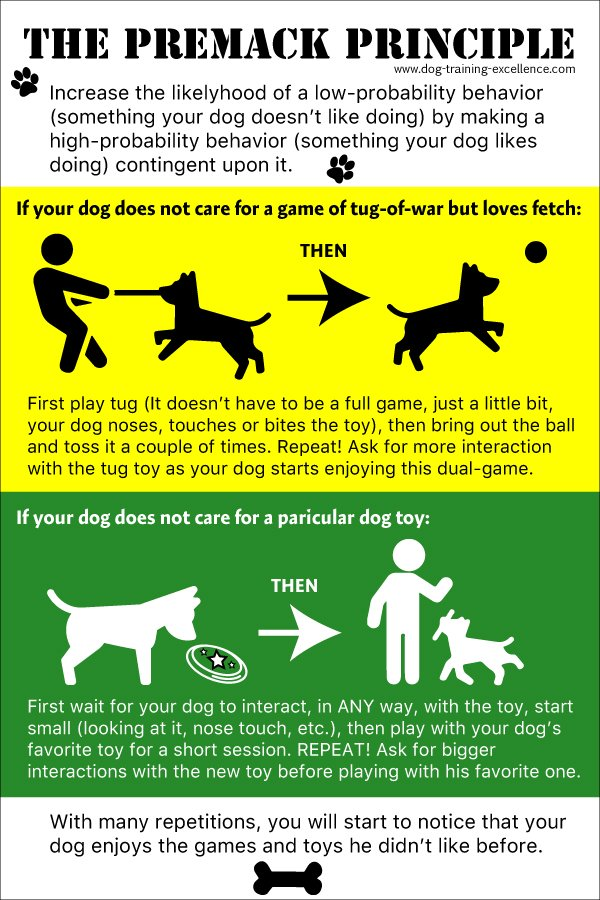 Premack principle infographic, best dog toys, dog training