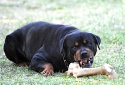 Dog food aggression by Cynoclub