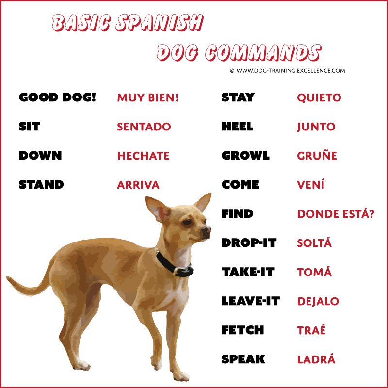 List of Spanish Dog Commands