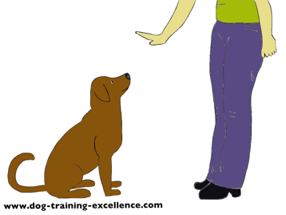dog training hand signal for stay by DTE