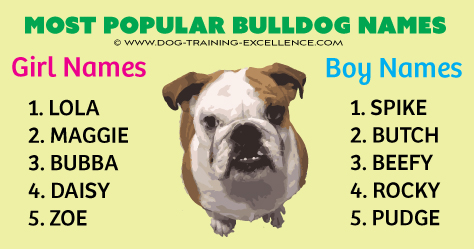 600 Unforgetabble Bulldog Names to Begin a Beautiful Friendship