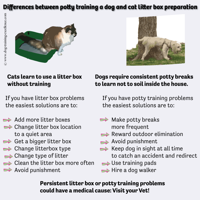 difference between dogs and cats, dog potty training problems, cat litter box