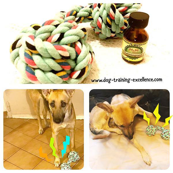 Dog toys, best dog toys