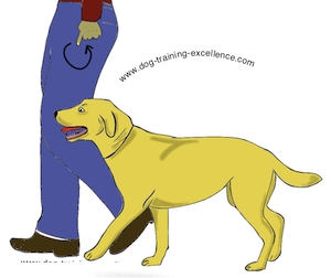 Illustration on how to have dog follow you.