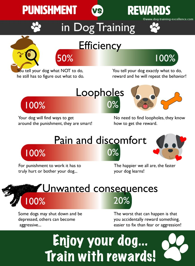 how dog training works, how to train a dog