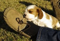 puppy chewing shoe by Andy Leonar
