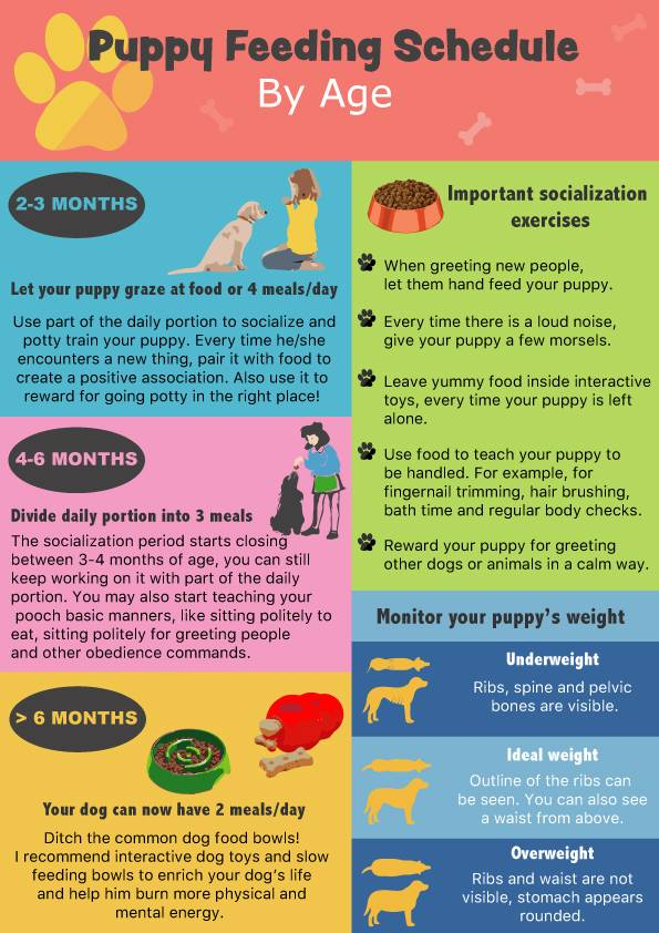 Puppy Feeding Schedule: Look at the chart, follow the tips!